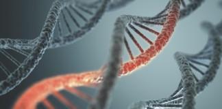 DNA, medicina rigenerativa