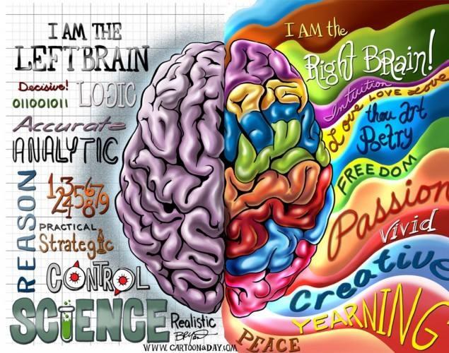 I due emisferi con le rispettive funzioni
