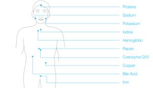 altri punti mediani del corpo con relativi valori da poter misurare