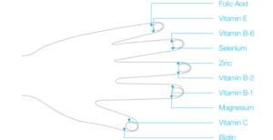Punti mediani della mano con relativi valori da poter misurare