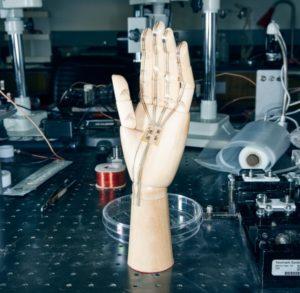 Espositore sensori per Protesi della Mano