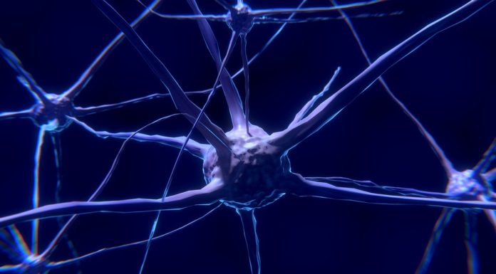 Neuroni cresciuti in un chip grazie ad una particolare matrice