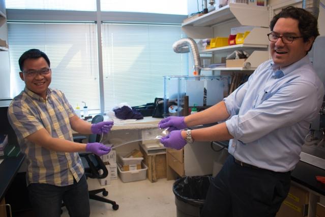 Uno speciale idrogel ingeribile realizzato dal MIT