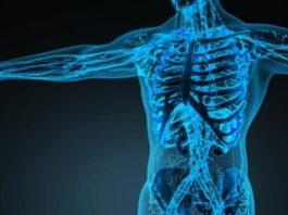 Una nuova telecamera capace di guardare attraverso il corpo umano