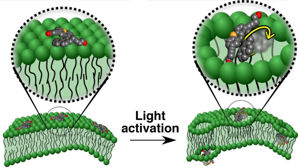 """Funzionamento delle molecole """"motorizzate"""""""
