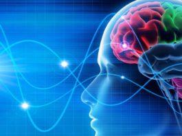 Cervello idealizzato